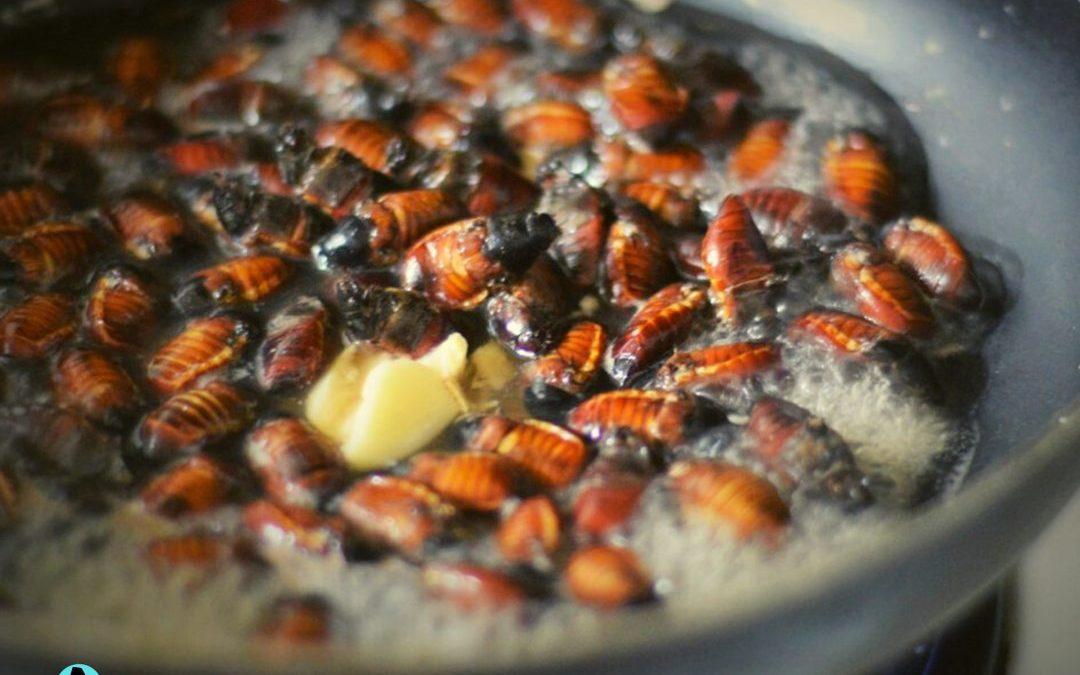 Taste of Abra: Abal-abal